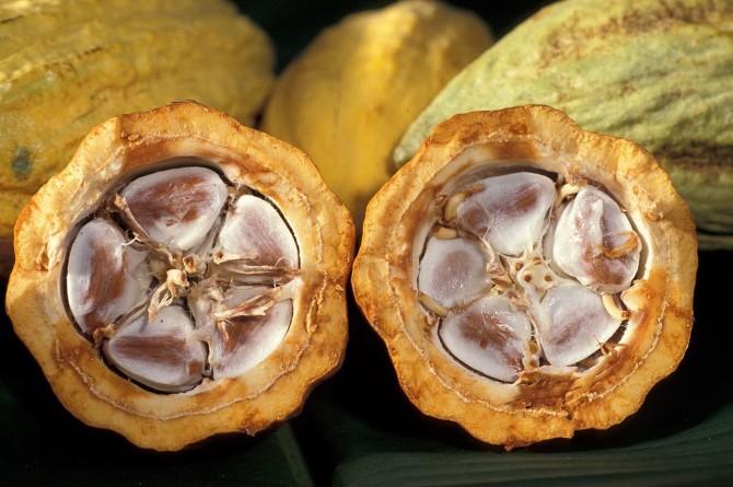 1280px-Cacao-pod-k4636-14