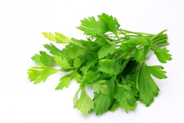 14_14_49_603_Parsley_Italian_Medium_